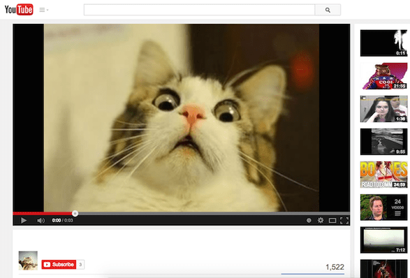 An image of a YouTube video of a cat.